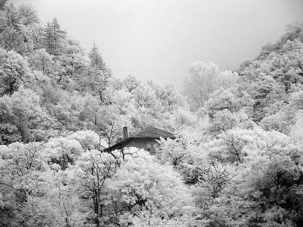 infrared-photo.jpg